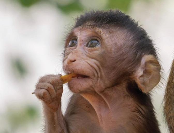 Chinese scientists produce gene-edited monkeys